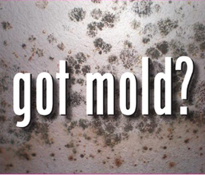 Mold Remediation Does Your Paulding/Polk Home Have a Mold Problem?