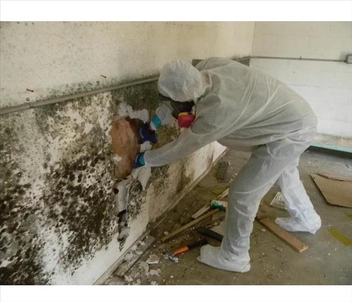 Mold Remediation Managing Mold
